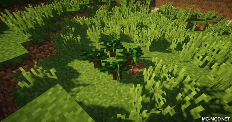 Trees of Stages mod for Minecraft (5)
