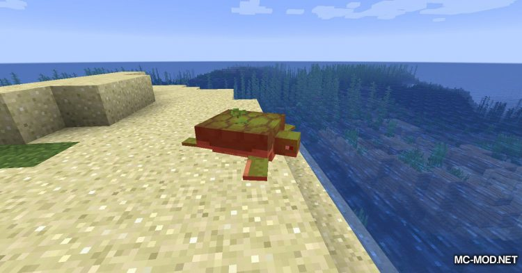 Turtle Shell Drop mod for Minecraft (14)