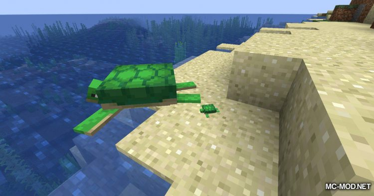 Turtle Shell Drop mod for Minecraft (7)