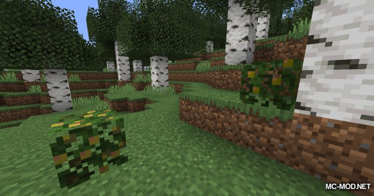 More Berries mod for Minecraft (3)