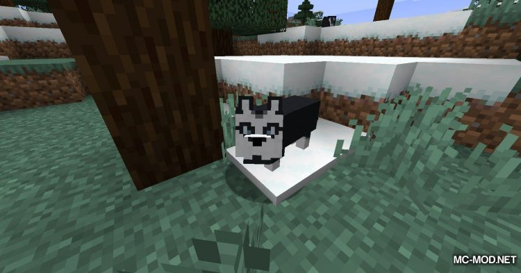 More Dogs mod for Minecraft (5)