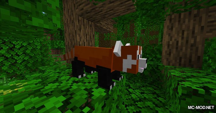 Red Pandas mod for Minecraft (11)