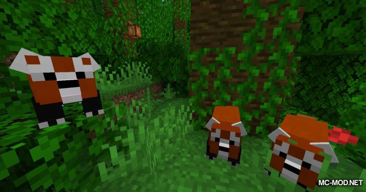Red Pandas mod for Minecraft (12)