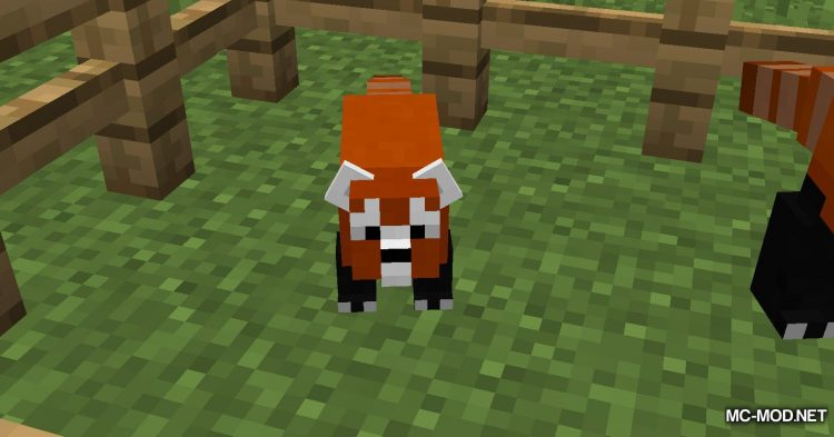 Red Pandas mod for Minecraft (9)